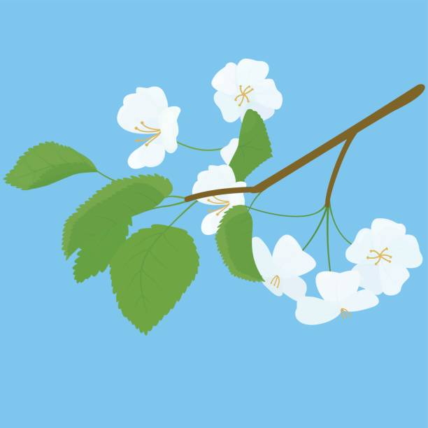 Blossoming Apple Tree spring Twig on blue Blossoming spring Apple Tree branch isolated on blue apple blossom stock illustrations