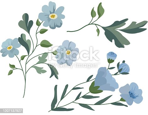 istock Blossoming blue spring flowers on white background. Vector illustration. linum perenne 1207137527