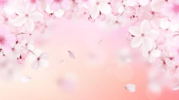 Blossoming light pink sakura flowers. Realistic cherry flowers vector art illustration