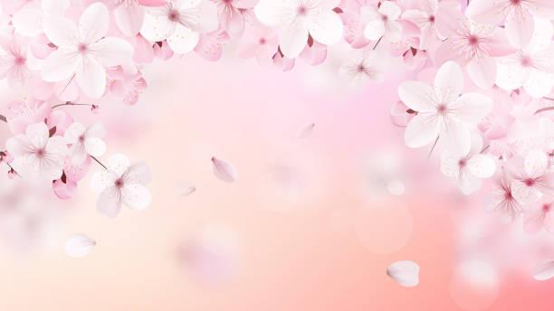 Blossoming light pink sakura flowers. vector art illustration
