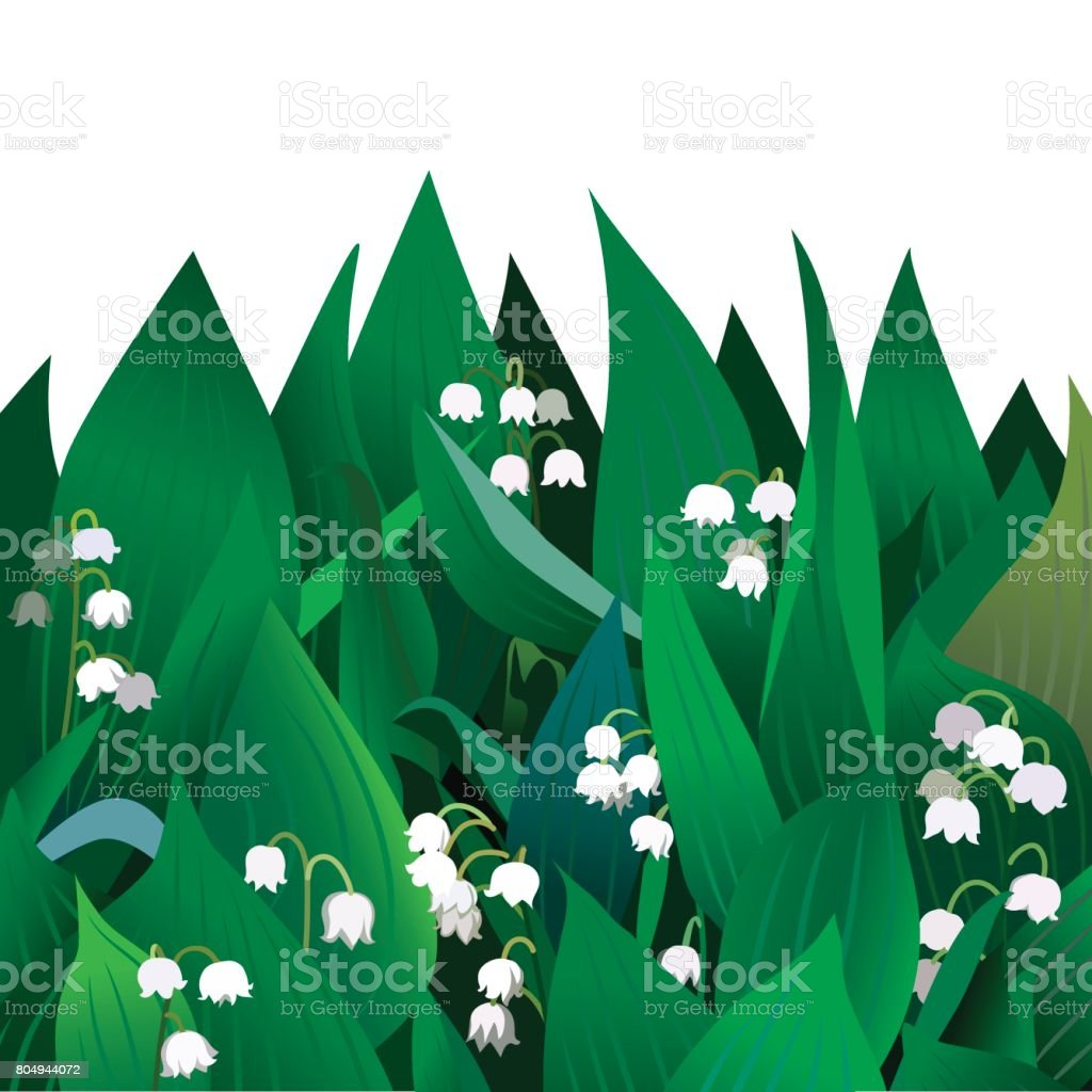 Blossoming Lilies Of The Valley Flowers And Leaves Stock Vector Art