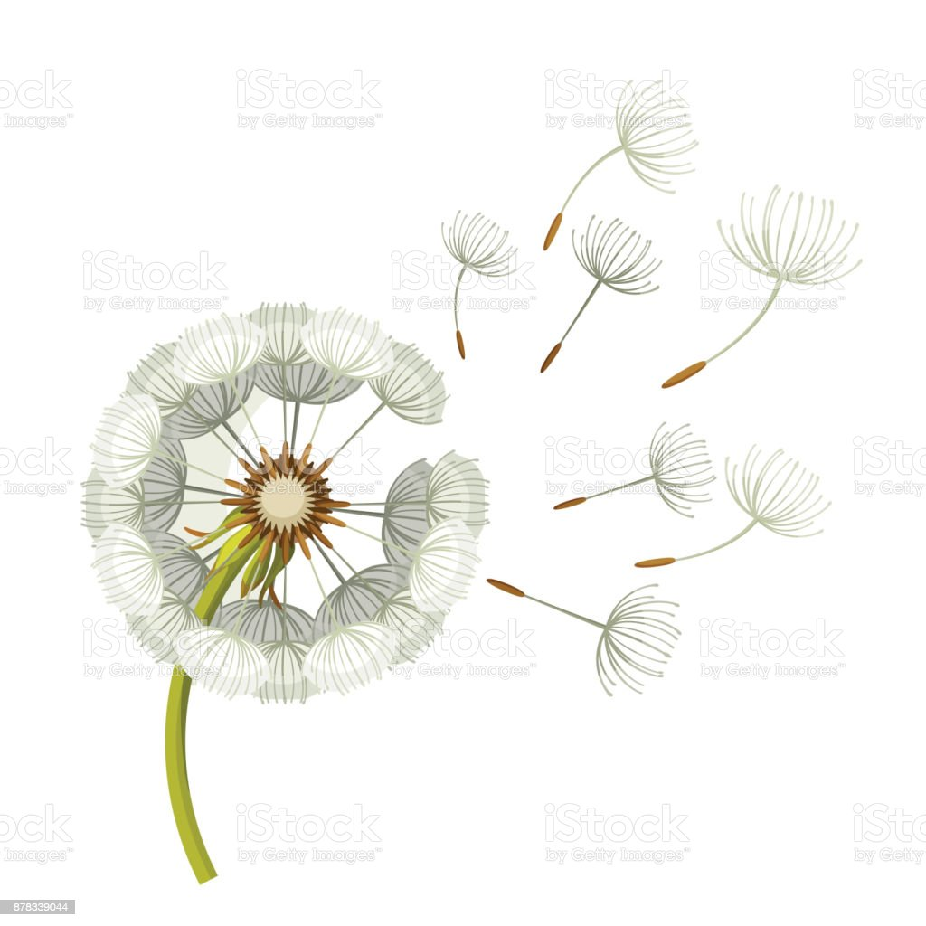 Blowing dandelion flower with fragile flying parts on green stem vector art illustration