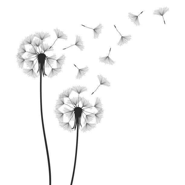 dandelions blowing the wind coloring pages | Best Dandelion Blowing Illustrations, Royalty-Free Vector ...