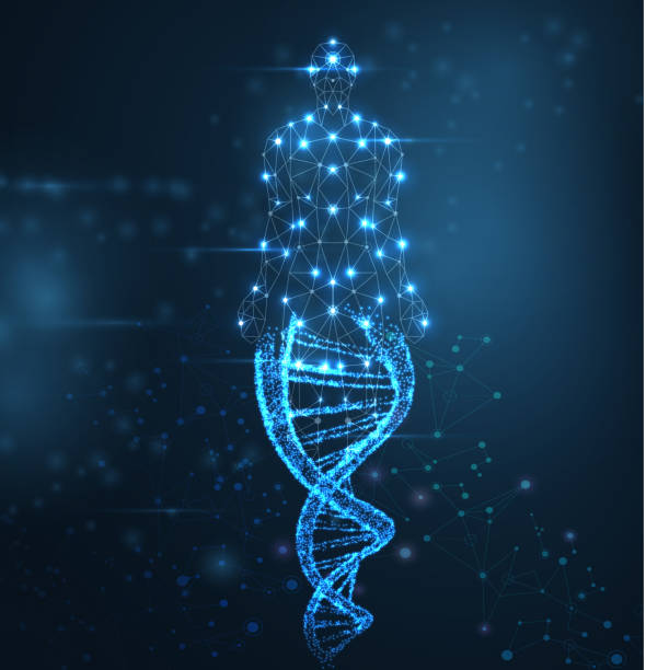 Blue abstract background with luminous DNA molecule, neon helix and human body. Blue abstract background with luminous DNA molecule, neon helix and human body. Medical science, genetic, biotechnology, chemistry, biology. Vector poster. genetic research stock illustrations
