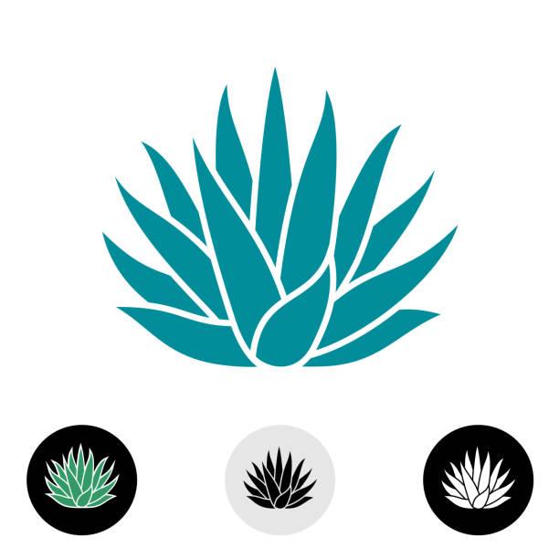 Silueta de vector de planta de agave azul. - ilustración de arte vectorial