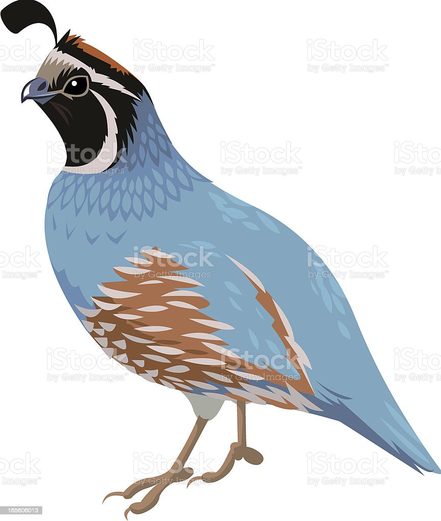 a blue and brown cartoon of a quail bird stock vector art more rh istockphoto com free quail clip art quail silhouette clip art