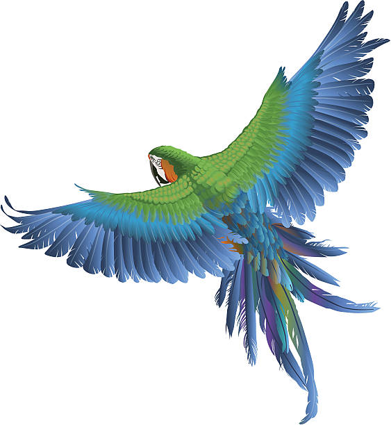 Blue and green parrot on white background  vector art illustration