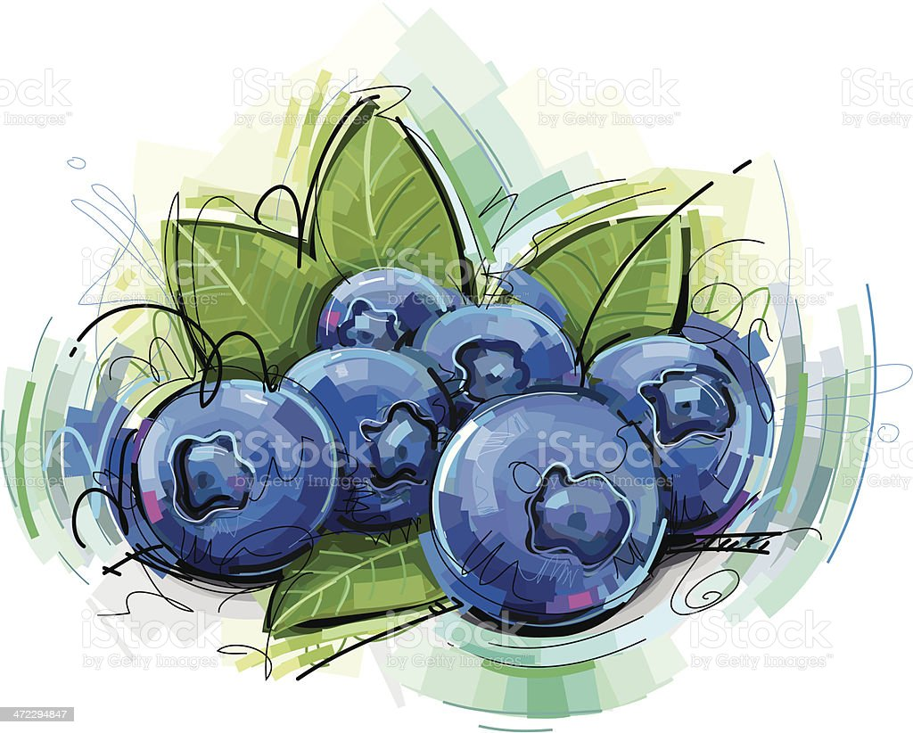blue berries sketch vector art illustration