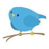 Blue bird on the branch