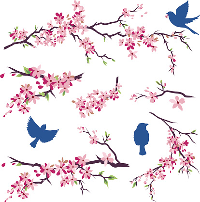 Blue Birds in Different Poses & Cherry Blossoms Branch Set