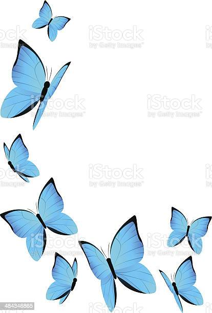 Blue butterflies for your design vector id484346865?b=1&k=6&m=484346865&s=612x612&h=rlrnovobwugbkbaarmgoaycmyqpfxbew2w1qymr7eog=