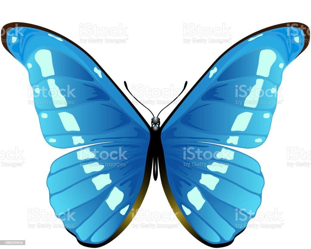 Farfalla Blu Su Sfondo Bianco Immagini Vettoriali Stock E Altre