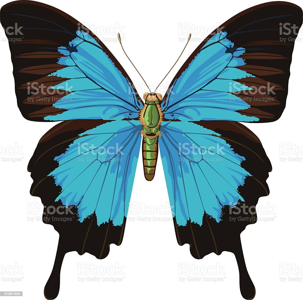 Blue Butterfly royalty-free blue butterfly stock vector art & more images of animal