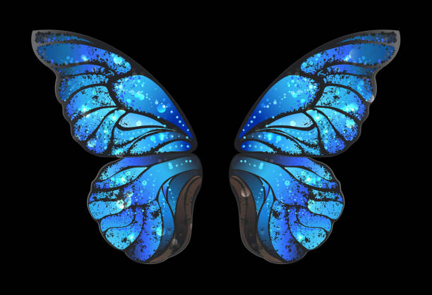 blue butterfly wings Detailed, blue butterfly wings morphines on black background. animal limb stock illustrations