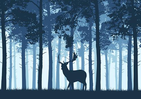 Wildlife stock illustrations
