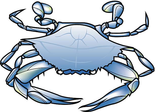 stockillustraties, clipart, cartoons en iconen met blue crab c2 - blauwe zwemkrab