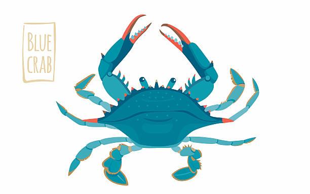 bildbanksillustrationer, clip art samt tecknat material och ikoner med blue crab, cartoon illustration - krabba