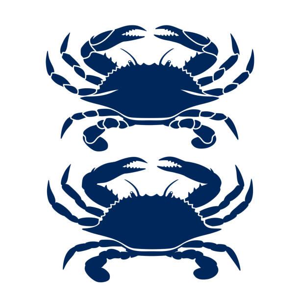 stockillustraties, clipart, cartoons en iconen met blauwe krabtekening - blauwe zwemkrab