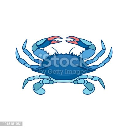 Blue Crab on a white background in watercolor style. Realistic, artistic, colored drawing of a blue crab. Vector illustration.