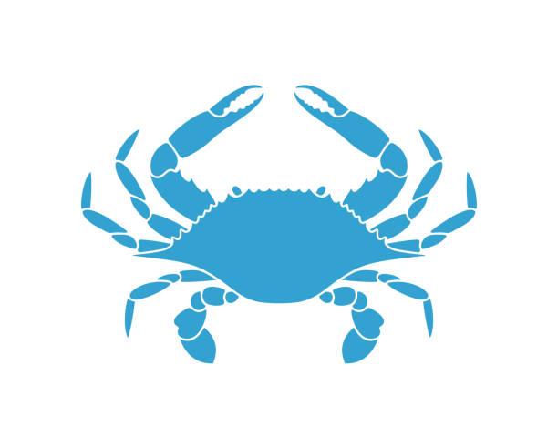 stockillustraties, clipart, cartoons en iconen met blauwe krab. geïsoleerde krab op witte achtergrond - blauwe zwemkrab
