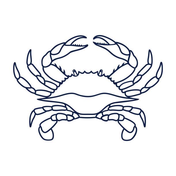 ilustrações de stock, clip art, desenhos animados e ícones de blue crab on white background - aquacultura