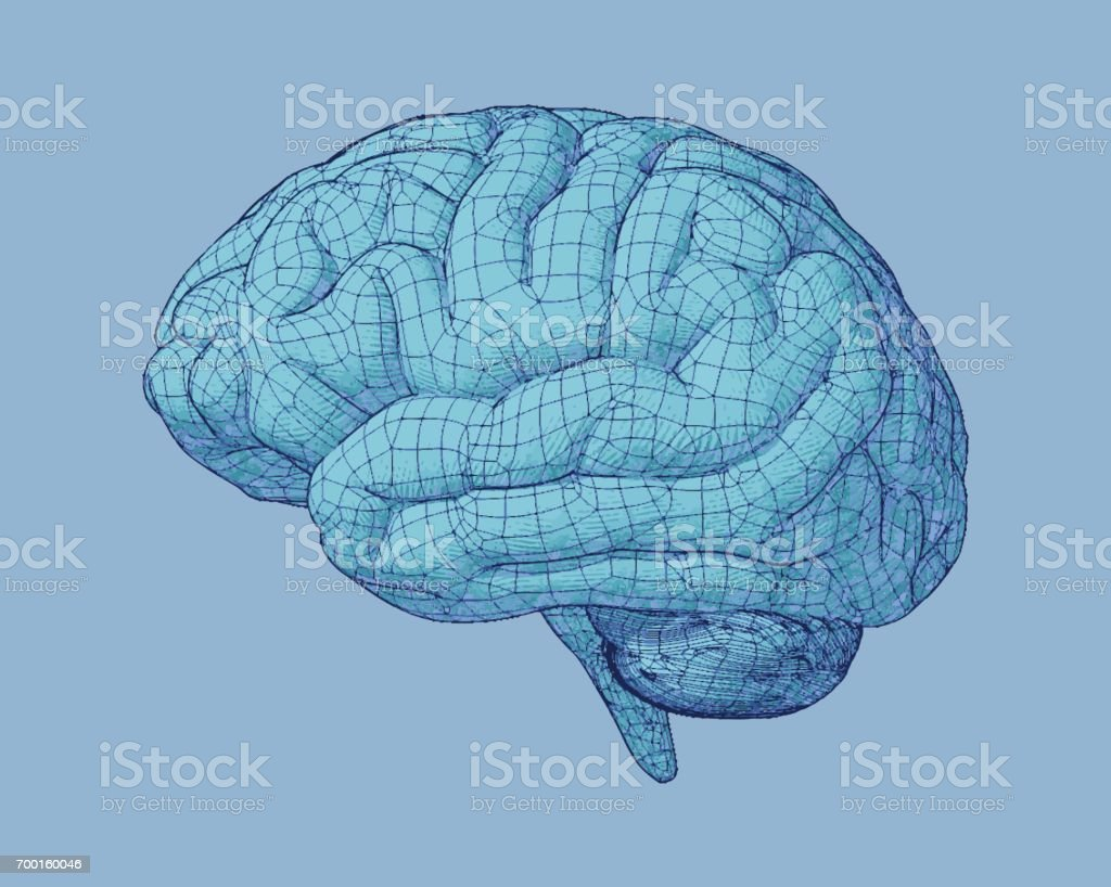 Ilustración De Dibujo De Cerebro Con La Ilustración De La