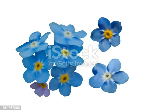 istock Blue forget me not spring flowers. Decorative elements vector set 984767060