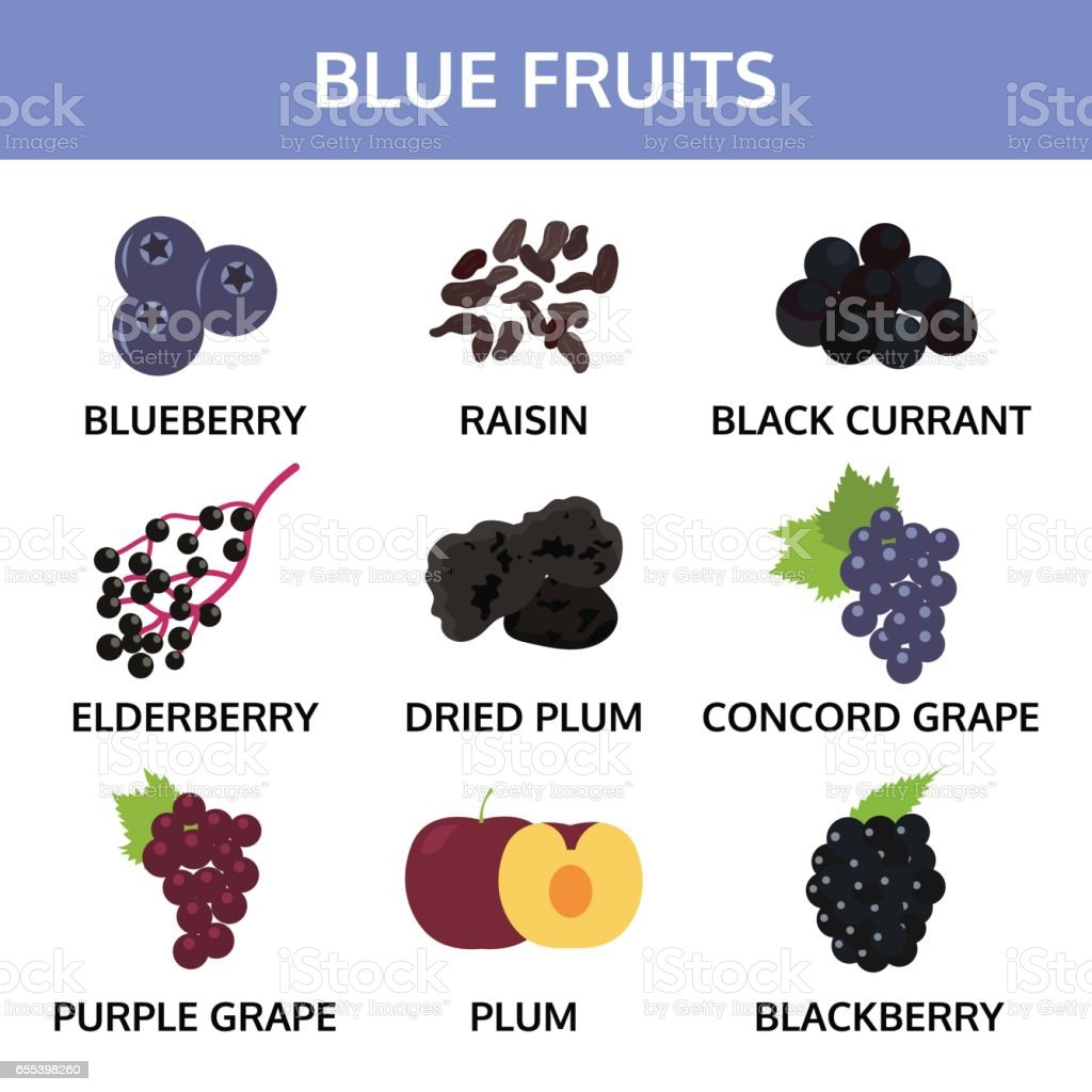 blue fruits collection info graphic food vector illustration stock