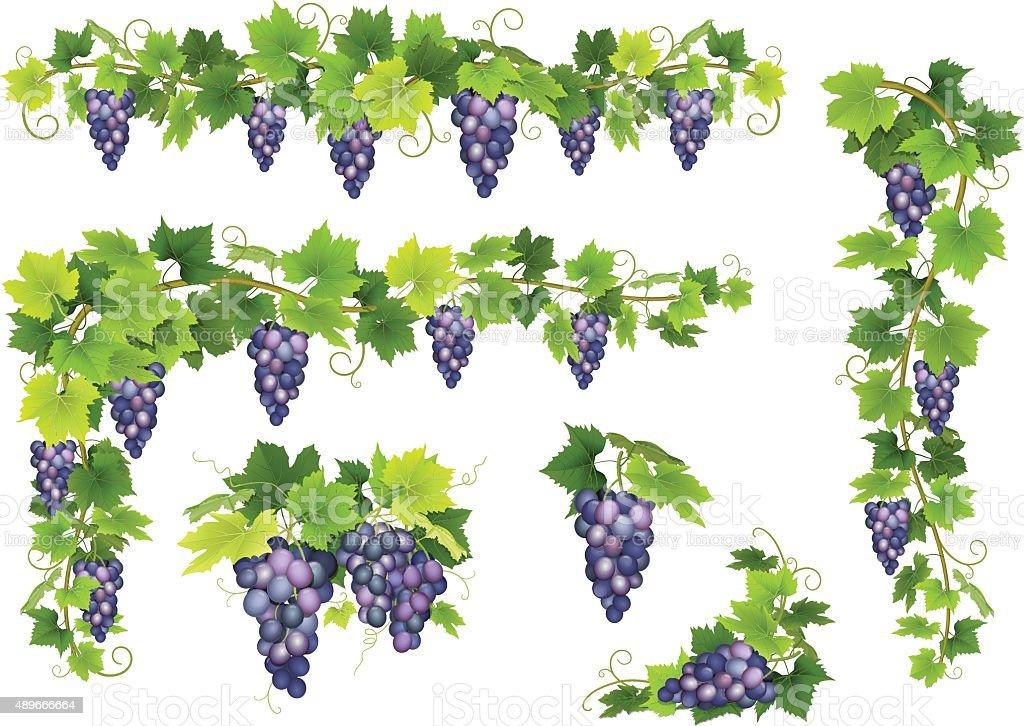 Blue grapes bunch set vector art illustration
