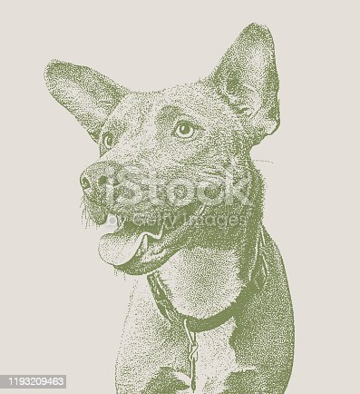 Mezzotint vector of a Blue Heeler, Border Collie, mixed breed dog mixed breed dog in animal shelter, hoping to be adopted