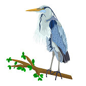 Heron bird, marsh fauna. Wild egret with long yellow beak and legs. Gray feathered stork. Design elements for prints. Stock vector illustration