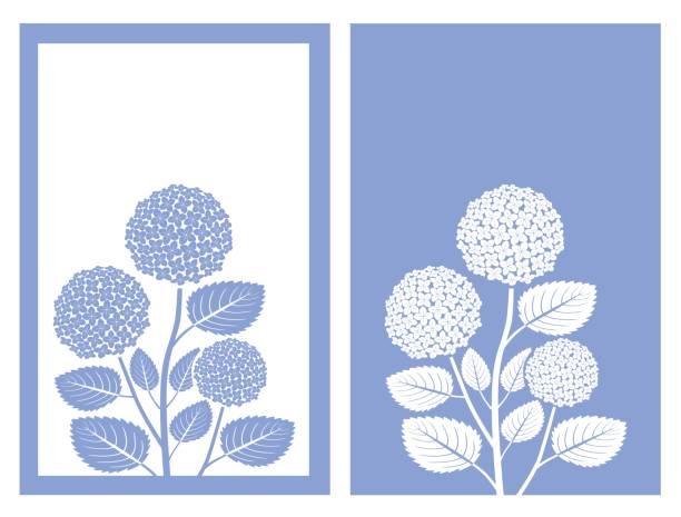 stockillustraties, clipart, cartoons en iconen met blauwe hortensia vector - hortensia