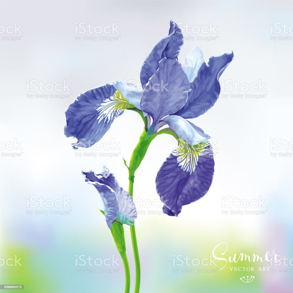 Blue Iris Vector Flower Stock Vector Art More Images Of