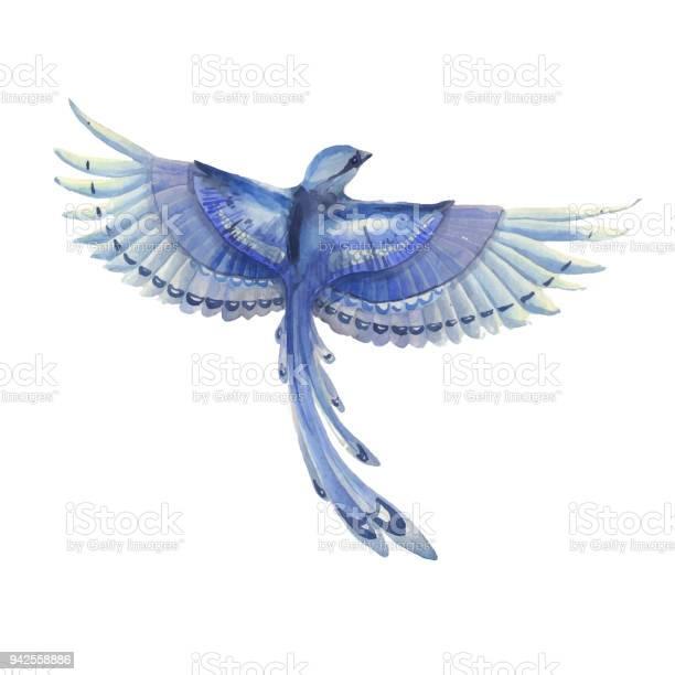 Blue jay bird flying watercolor hand drawn illustration blue feathers vector id942558886?b=1&k=6&m=942558886&s=612x612&h=pogq2 mufcyh9uqwwjc2z1q1nc9iwr0duligliloyue=