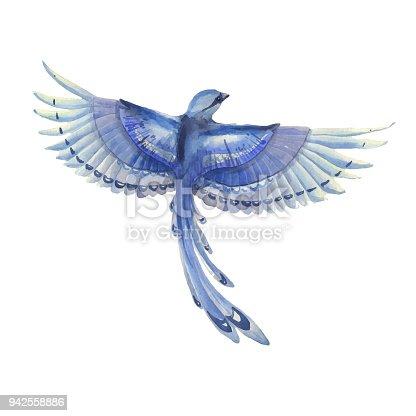 Geai bleu oiseau qui vole illustration aquarelle dessin s la main caract re de plumes bleu - Jeux d oiseau qui vole ...