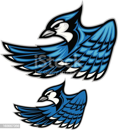 This is a cleanly constructed image of a Blue Jay upper body. This file comes with a single and multi-level colored version. All secondary color levels are removable down to a simple flat color image. A BLACK & WHITE version is also available for download. The file is provided as an Illustrator 8 EPS and a 300dpi high-rez jpg.