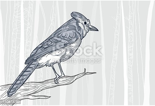 Blue Jay perched on a branch in front of a wintery forest background.