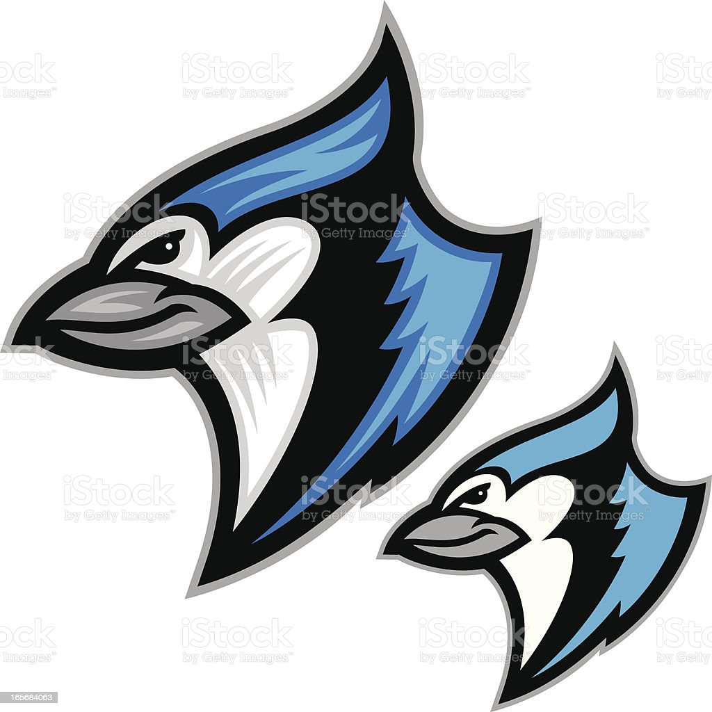 Blue Jay vector art illustration