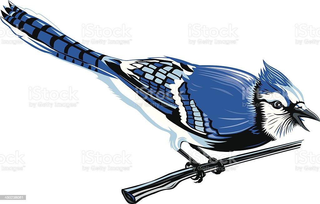 Blue Jay vector art illustration