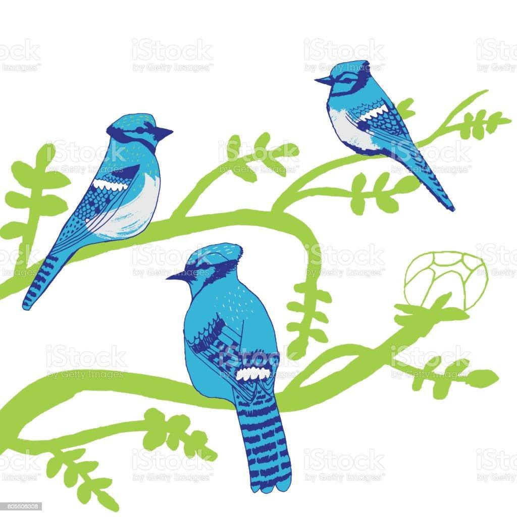 Blue Jays birds vector art illustration