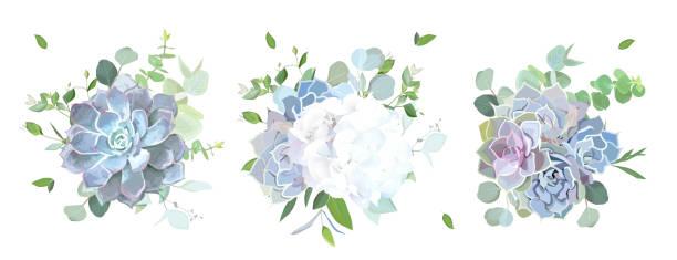 blau, lila, violett und weiß blumen und sukkulenten - kräutermischung stock-grafiken, -clipart, -cartoons und -symbole