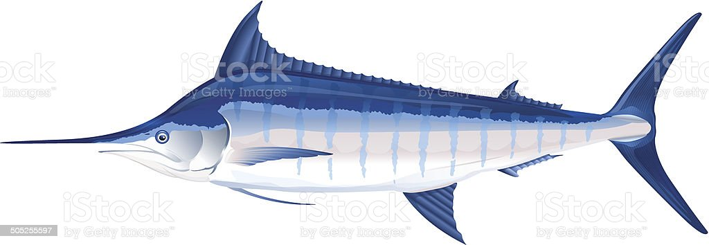 Blue marlin fish vector art illustration