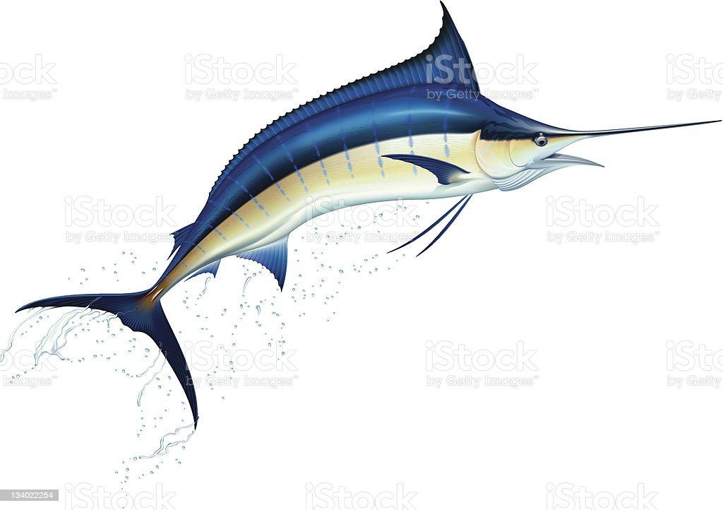 royalty free sailfish clip art vector images illustrations istock rh istockphoto com Sailfish Paintings Sailfish Graphics