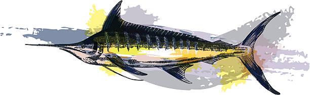 Blue Marlin vector art illustration