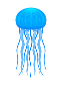 medusa, blue bright jellyfish, aquatic life illustration