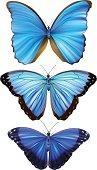 Blue Morpho Butterfly - Vector Illustration