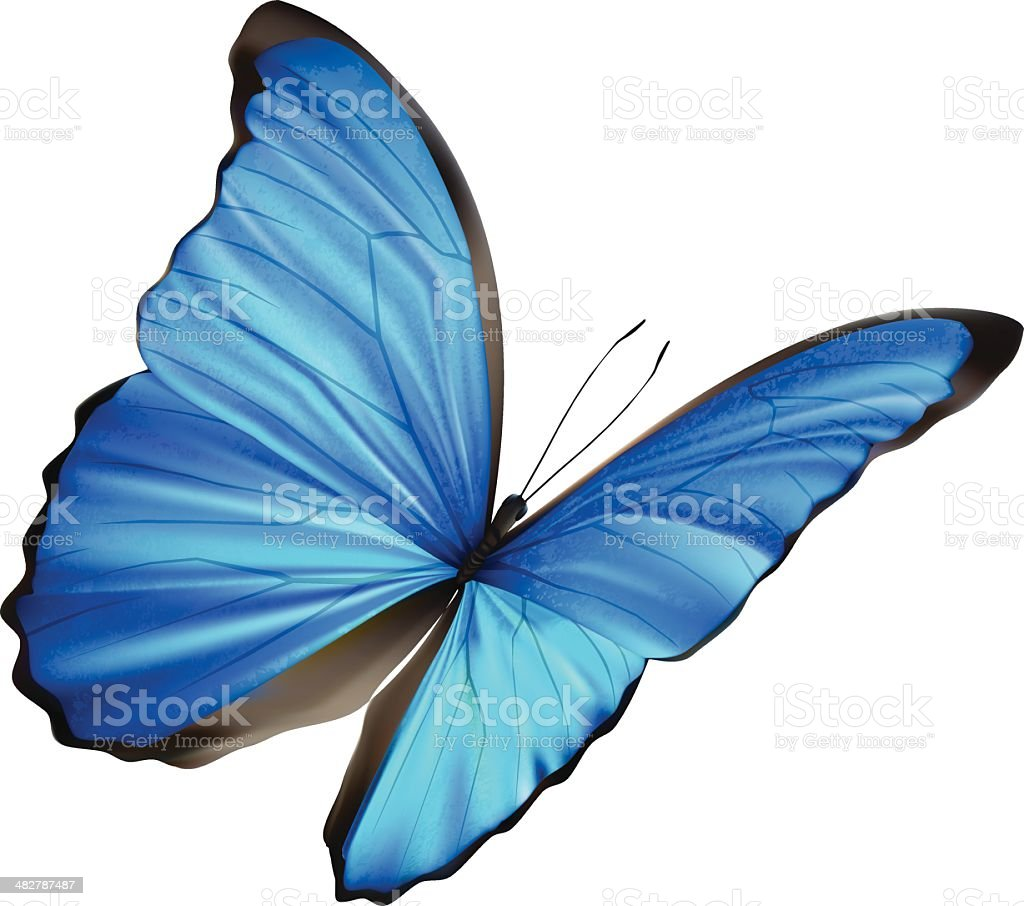 Blue Morpho - Vector Illustration royalty-free stock vector art