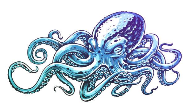 blaue krake vektorgrafiken - krake cephalopode stock-grafiken, -clipart, -cartoons und -symbole