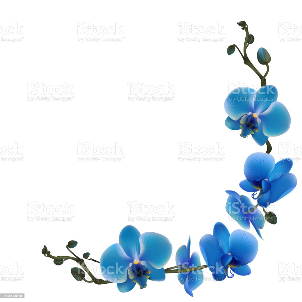 Ilustracion De Orquideas Azules Flores Tropicales Plantas Exoticas