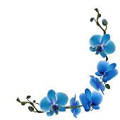 Blue orchids. Tropical flowers. Exotic plants. Frame. Border. Vector illustration.